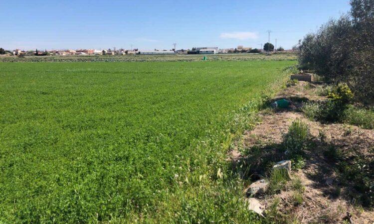 Resale Grondstuk Te koop in Dolores in Spanje, gelegen aan de Costa Blanca-Zuid