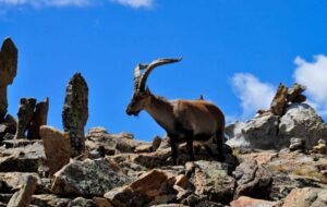 De andere bezoekers van de Caminito del Rey