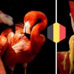 De verschillende betekenissen van het Spaans woord 'Flamenco'