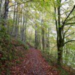Spanje is het tweede land van Europa met de meeste bossen en dit zijn de grootste